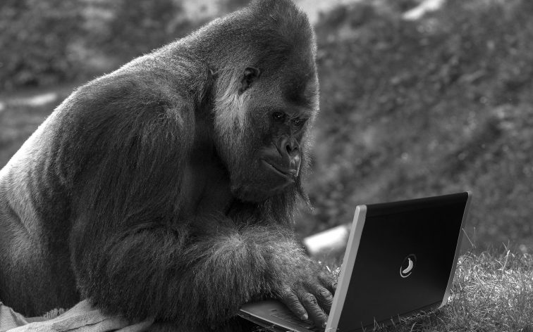 Ape Laptop | Reading, Writing, Working | Greater Ape