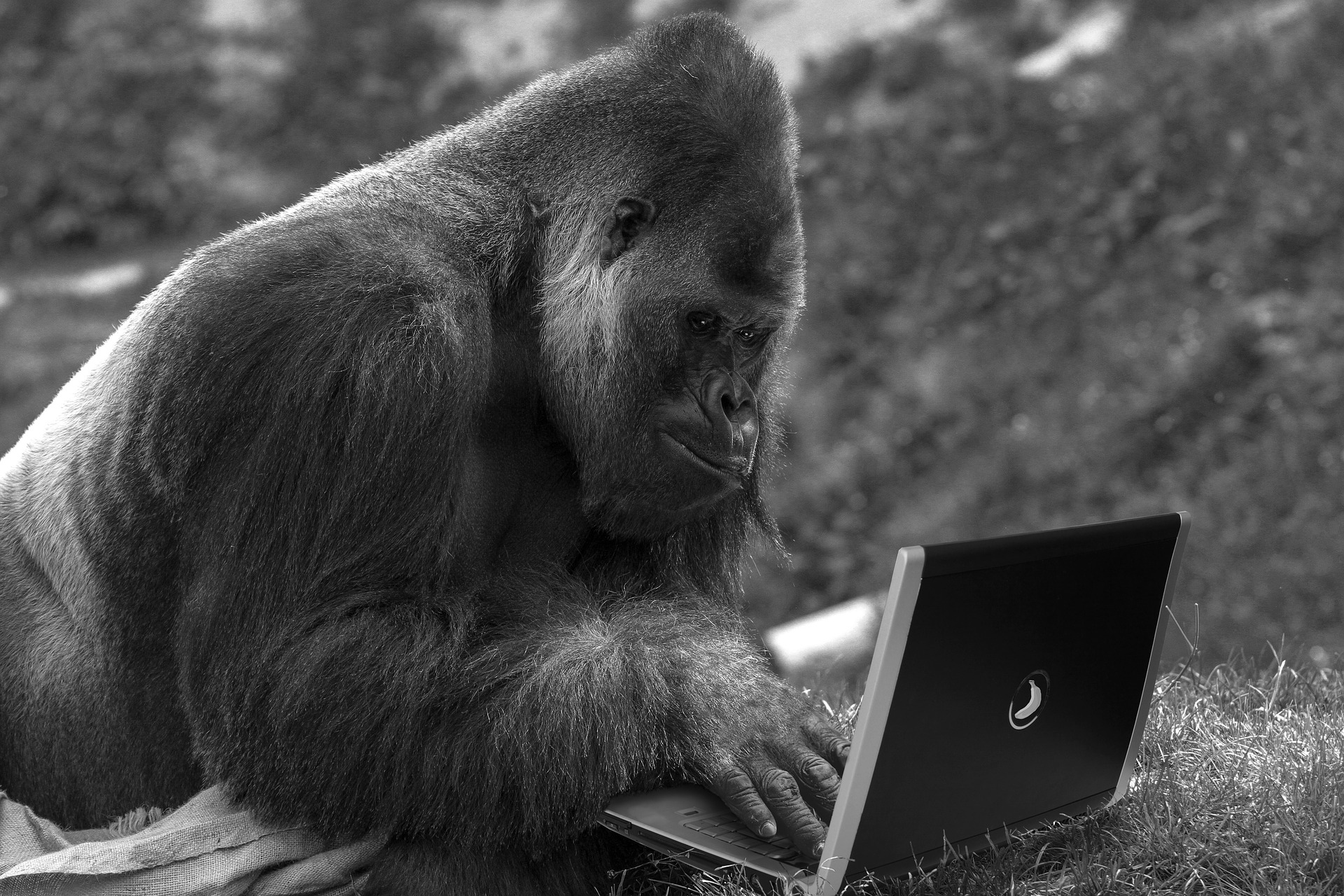 Reading, Writing, Working - Greater Ape